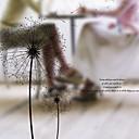 رخيصةأون تزيين المنزل-فيلم نافذة وملصقات زخرفة بسيط ورد PVC ملصق النافذة