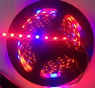 Недорогие -5-метровый светодиодный светильник 3red& 1blue растущий smd5050 ip20 светодиодная лента растущий свет dc12v