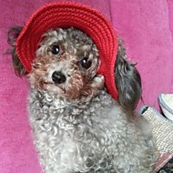 Недорогие Бижутерия и аксессуары для собак-Коты Собаки Банданы и шляпы Красный Оранжевый Синий Лиловый Черный Розовый Одежда для собак Весна/осень Однотонный Праздник