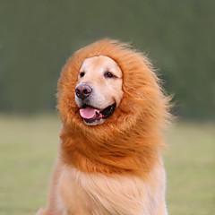 billige Kat Tøj-Kat Hund Kostume Parykker Hundetøj Cosplay Løve Dyr Hvid Sort Lysebrun Mørkebrun Kostume For kæledyr