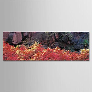 الطباعة يطبع قماش يلف - مواسم فوتوغرافي الحديث المطبوعات الفنية