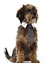 Кошка Собака Свитера Рождество пояс/Бабочка Одежда для собак В полоску Красный Синий полоса Ткань Костюм Для домашних животных Муж. Жен.