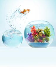 Akwaria i akcesoria dla rybe...